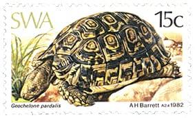 tortoises of namibia
