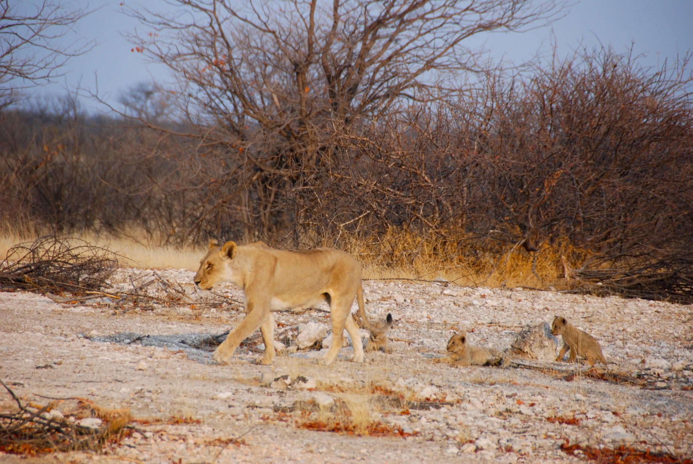 420 kms tarmac. Accommodation near Etosha National Park.