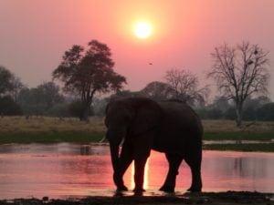 rs-p1000470-elephant