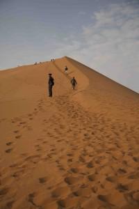 _13A6324 dune walkers sm