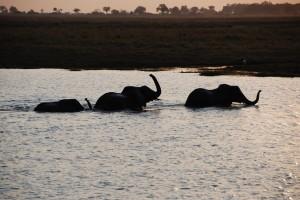 Day 3 Botswana Africa 216