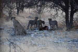 Day 5 Safari 184