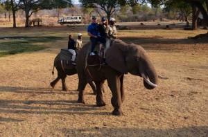 Cathy day 8 - 1 elephants sm